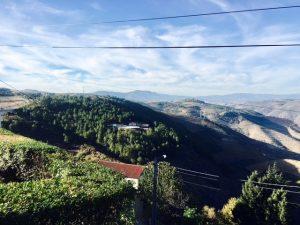 Quinta em Armamar T5/T6, Meio Hectare, Pomar Lindíssimo, Turismo Rural